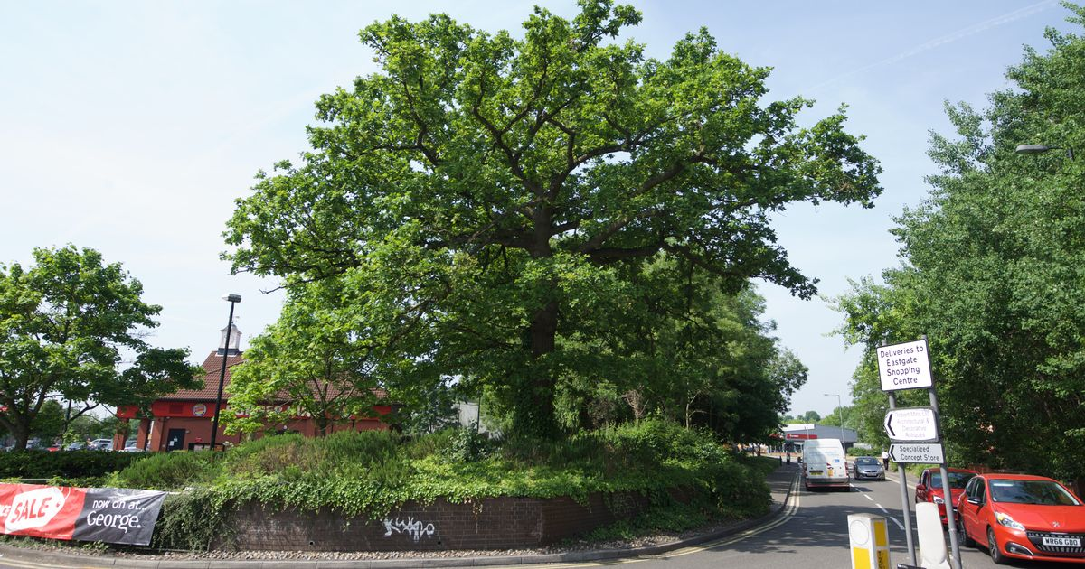 Oak tree saved by people power