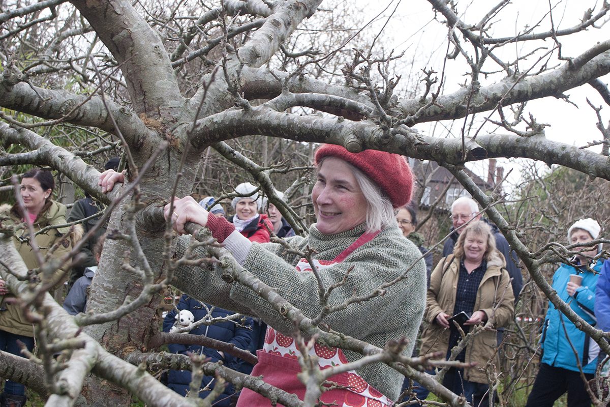 Horfield Organic Community Orchard gets wassailed
